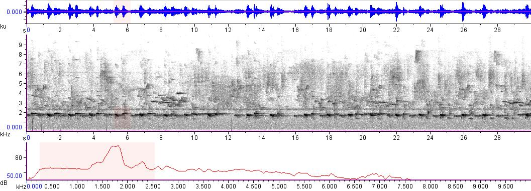 Sonogram of recording #AV 3469