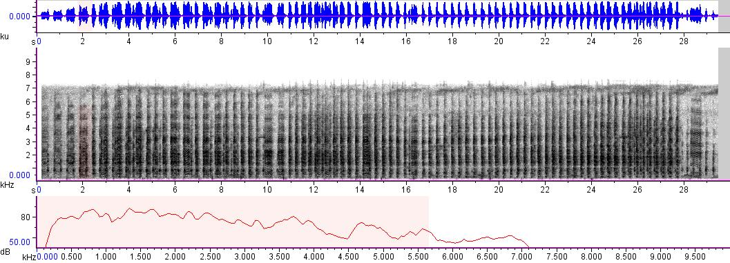 Sonogram of recording #AV 3472