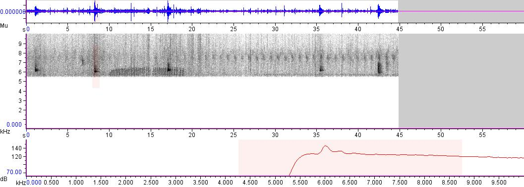 Sonogram of recording #AV 3504
