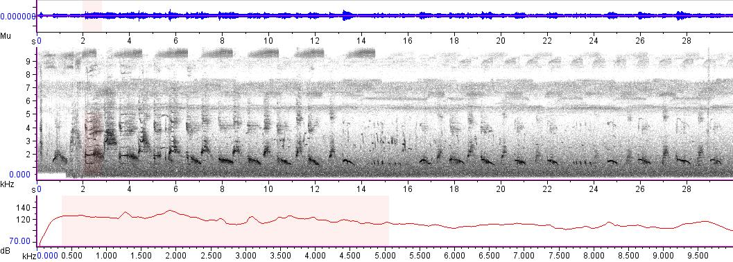 Sonogram of recording #AV 3508
