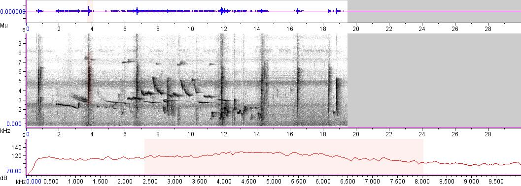 Sonogram of recording #AV 3643
