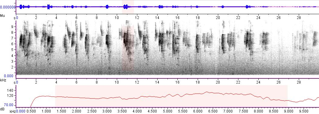 Sonogram of recording #AV 3650