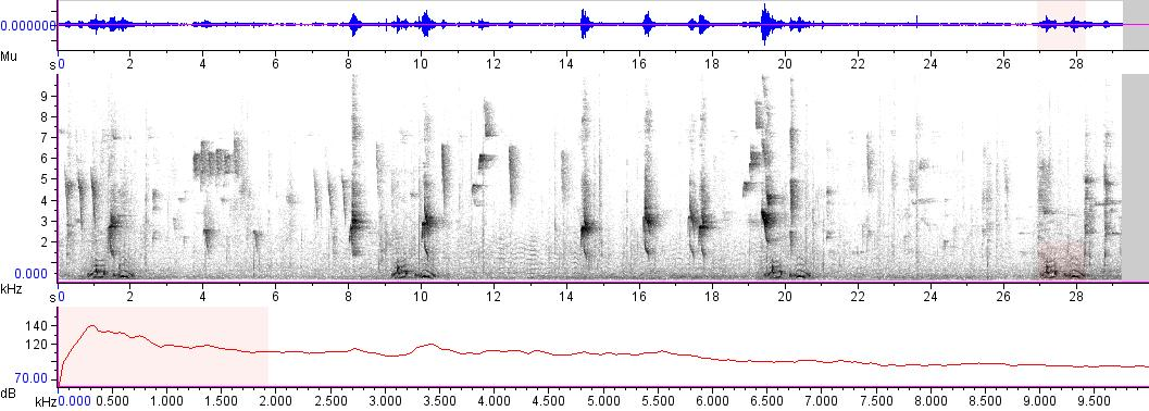 Sonogram of recording #AV 3693