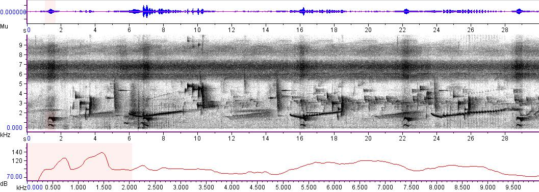Sonogram of recording #AV 3716