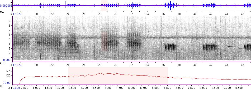 Sonogram of recording #AV 3732