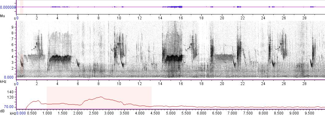 Sonogram of recording #AV 3763