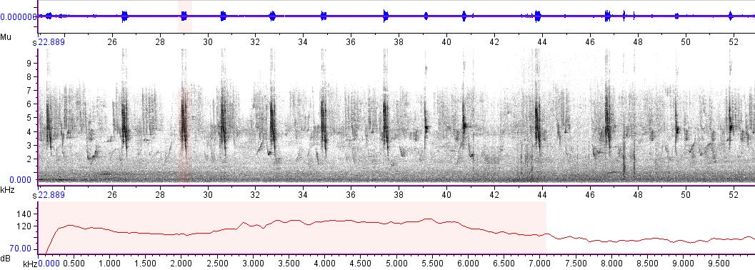 Sonogram of recording #AV 3860