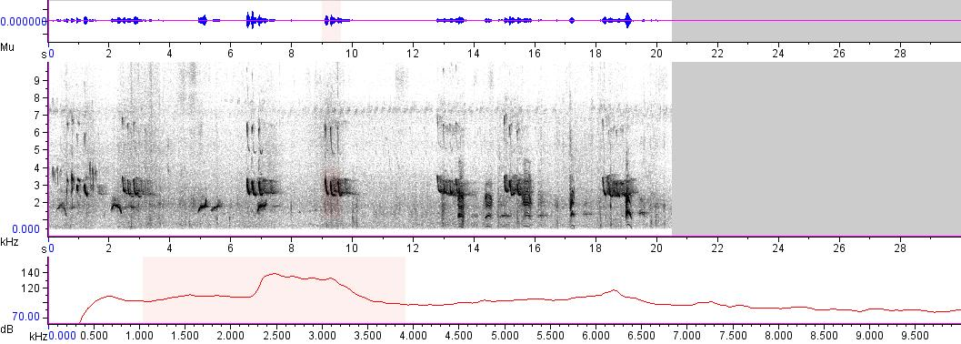 Sonogram of recording #AV 3884