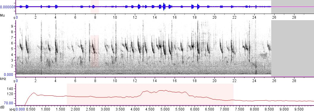 Sonogram of recording #AV 3891