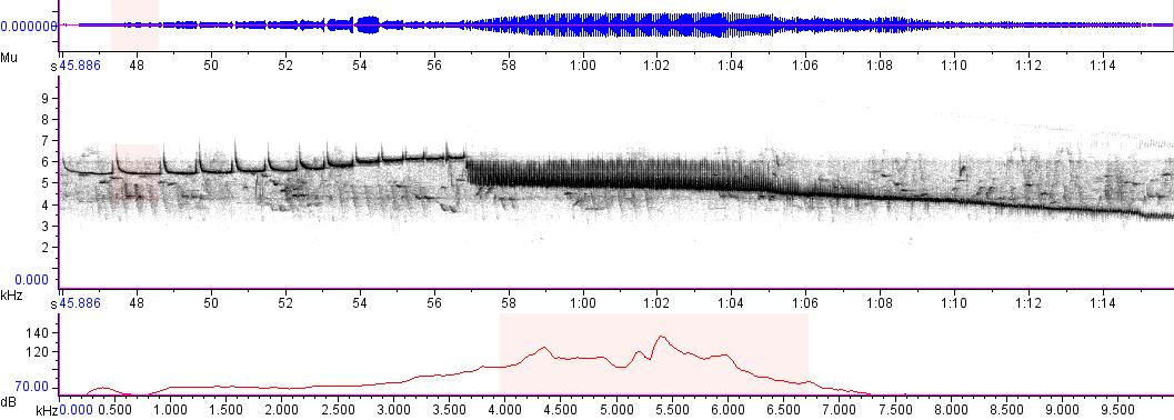 Sonogram of recording #AV 3935