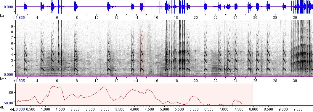 Sonogram of recording #AV 400