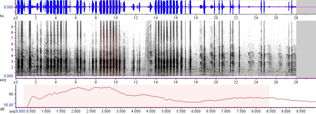 Sonogram of recording #AV 402