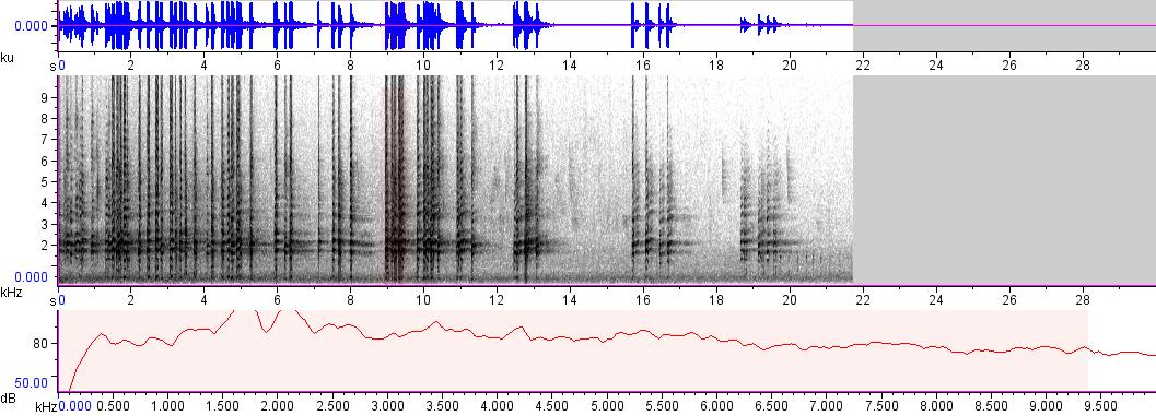 Sonogram of recording #AV 425