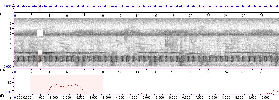 Sonogram of recording #AV 450