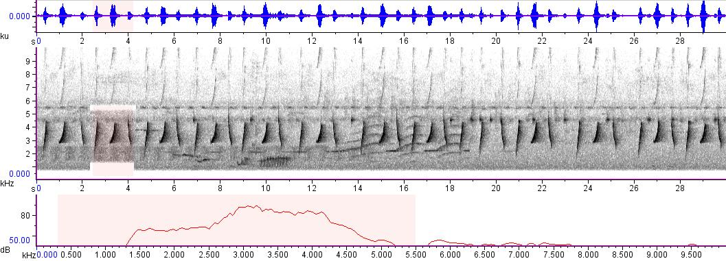 Sonogram of recording #AV 466