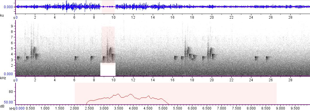 Sonogram of recording #AV 473