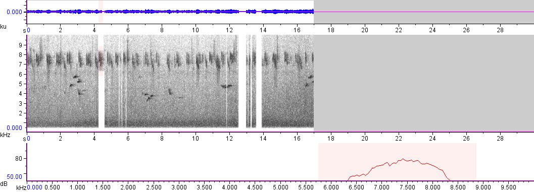 Sonogram of recording #AV 488