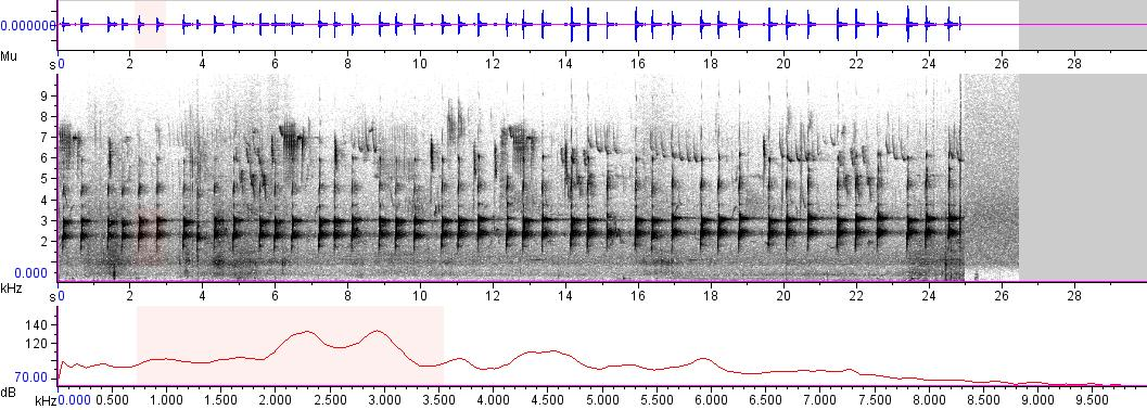 Sonogram of recording #AV 4017