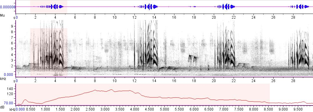 Sonogram of recording #AV 4047