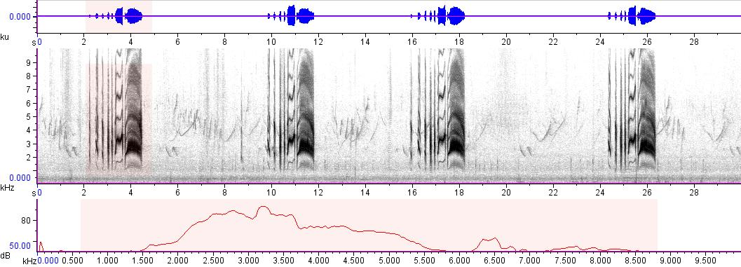 Sonogram of recording #AV 4048