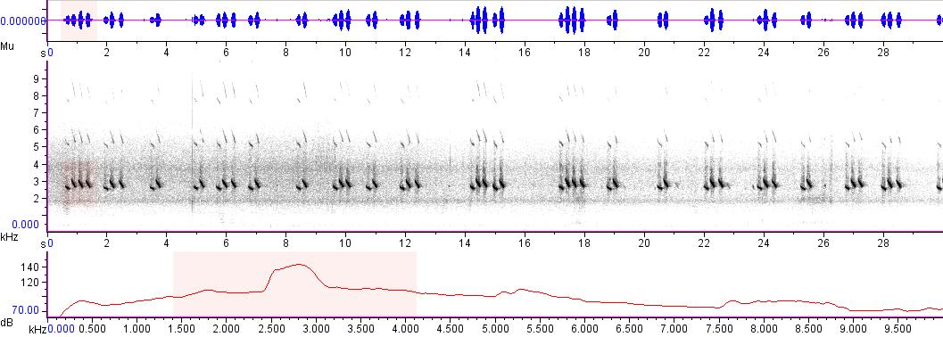 Sonogram of recording #AV 4095