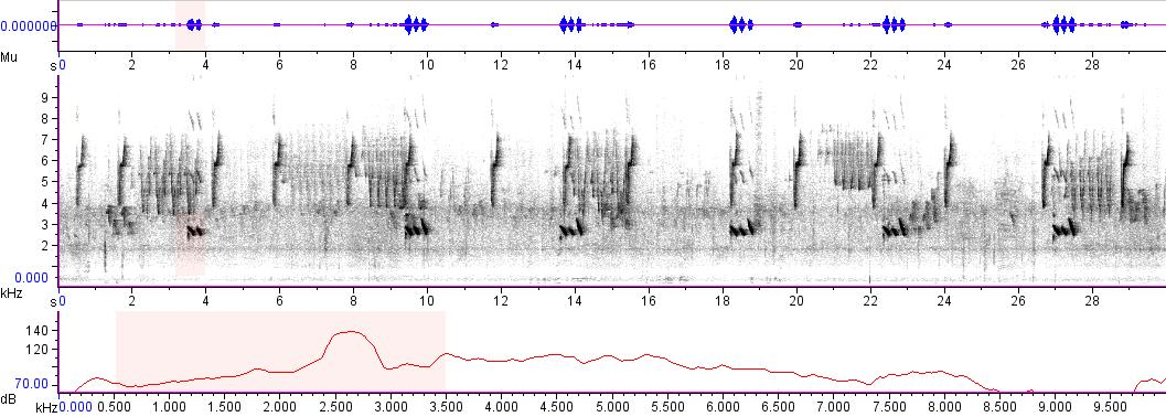 Sonogram of recording #AV 4096