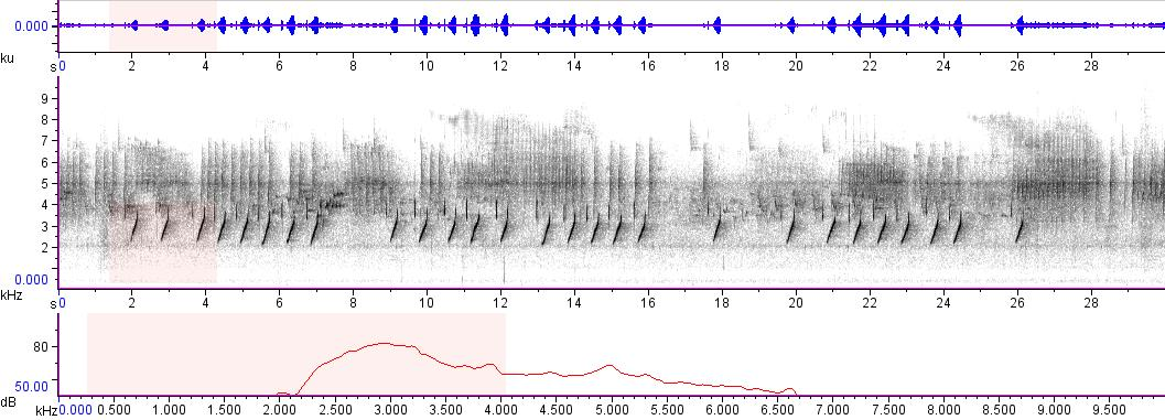 Sonogram of recording #AV 4105