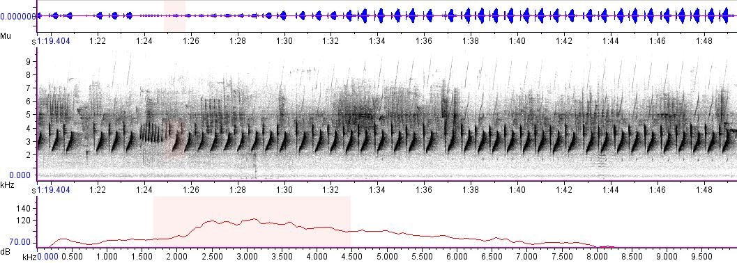 Sonogram of recording #AV 4106