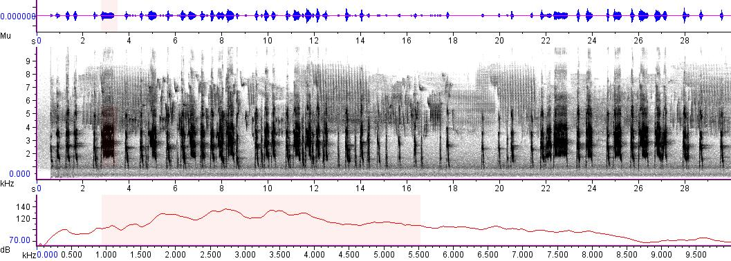 Sonogram of recording #AV 4122