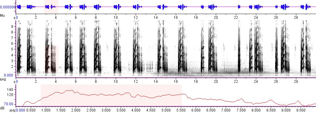 Sonogram of recording #AV 4125