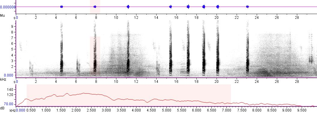 Sonogram of recording #AV 4126