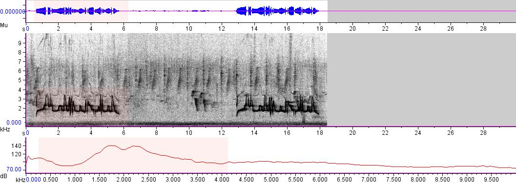 Sonogram of recording #AV 4128