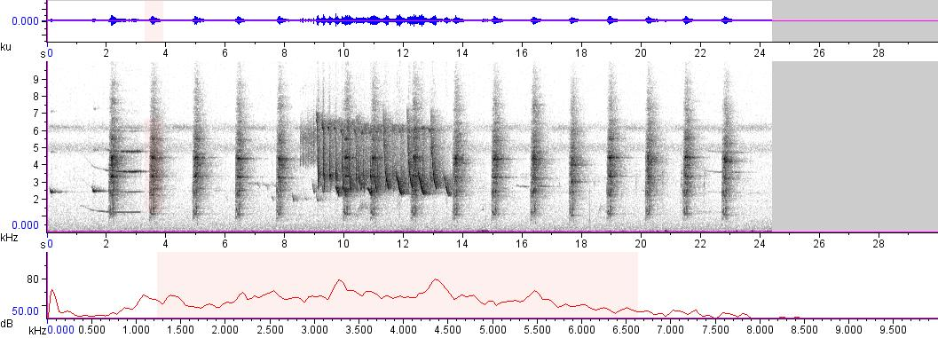 Sonogram of recording #AV 4146