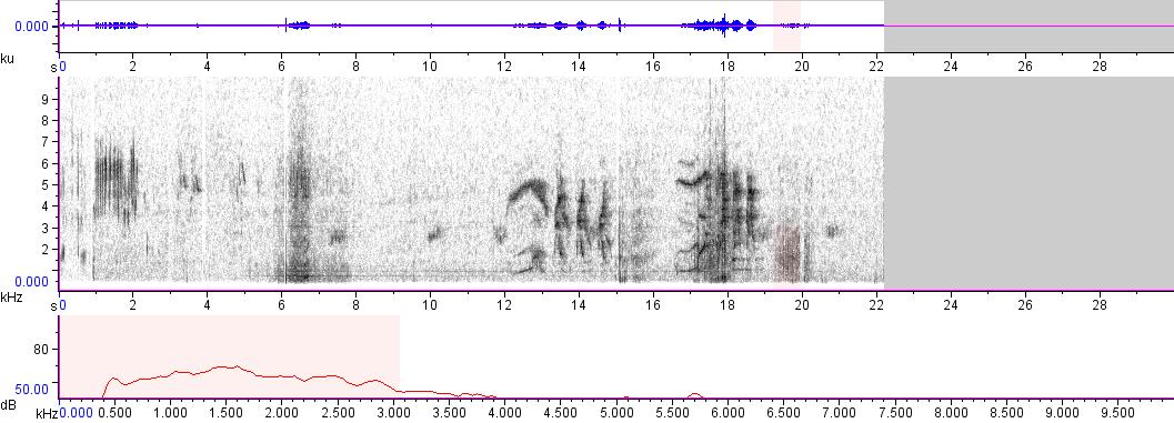 Sonogram of recording #AV 4153