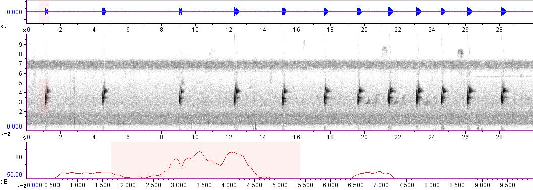 Sonogram of recording #AV 4307