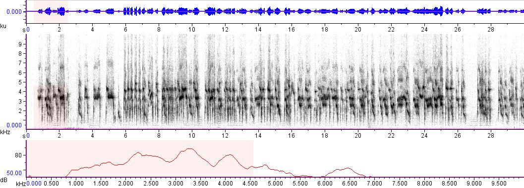 Sonogram of recording #AV 4333