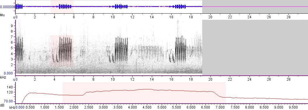 Sonogram of recording #AV 4387