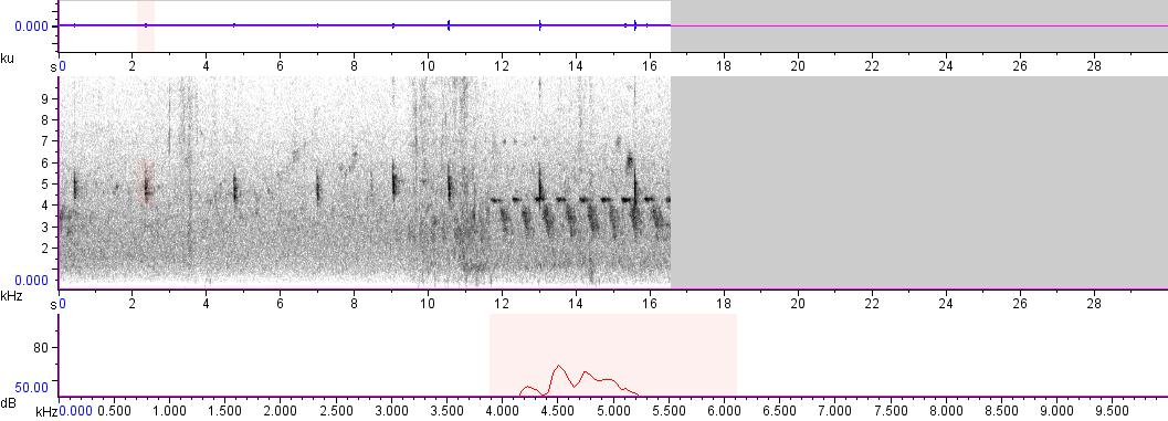 Sonogram of recording #AV 4407