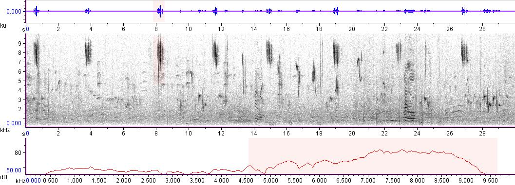 Sonogram of recording #AV 4475