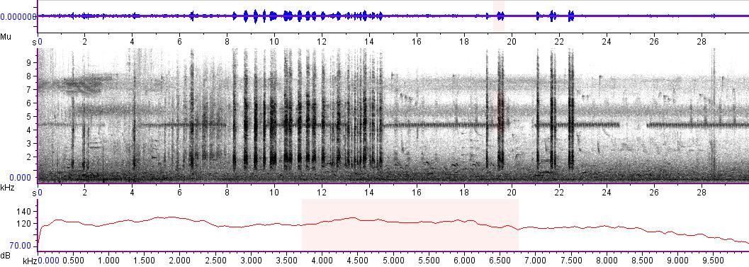 Sonogram of recording #AV 4731