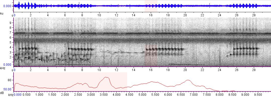 Sonogram of recording #AV 4777