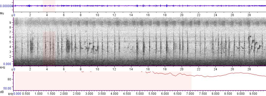 Sonogram of recording #AV 4782