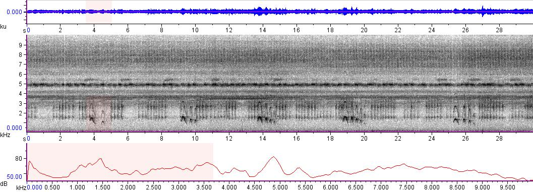Sonogram of recording #AV 4789