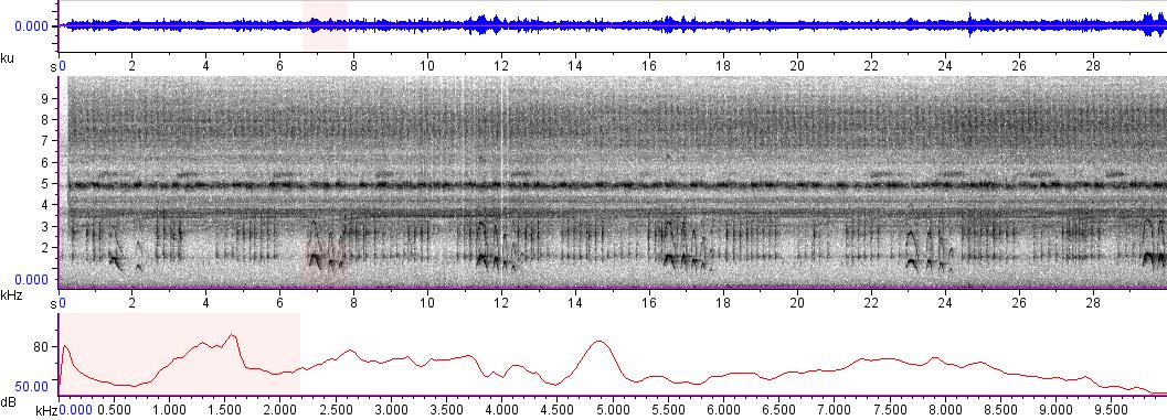 Sonogram of recording #AV 4790