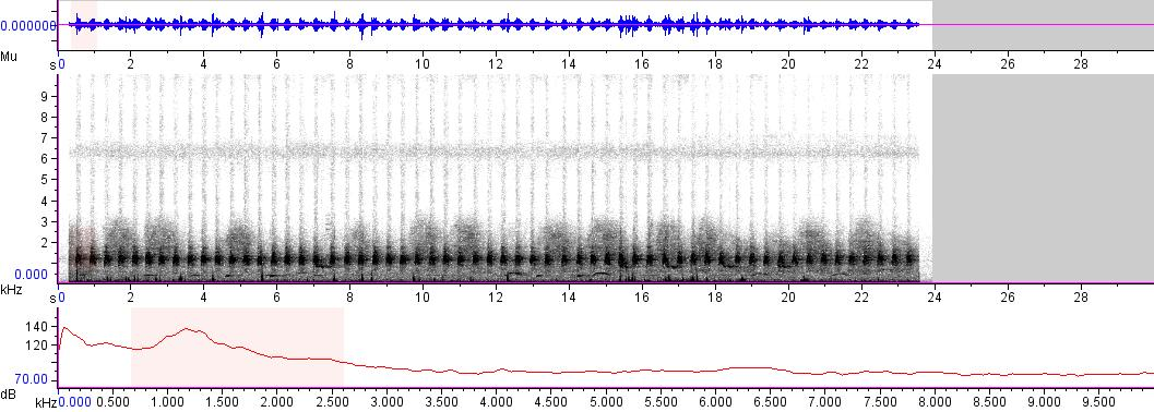 Sonogram of recording #AV 4812