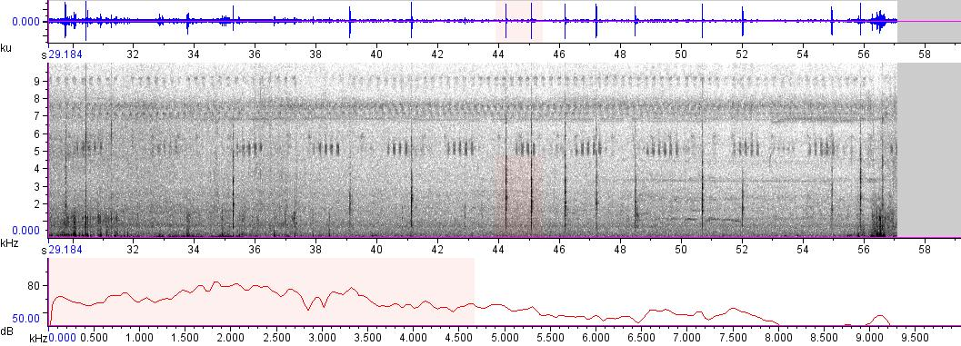 Sonogram of recording #AV 4818