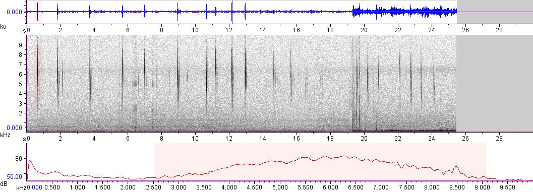 Sonogram of recording #AV 4826