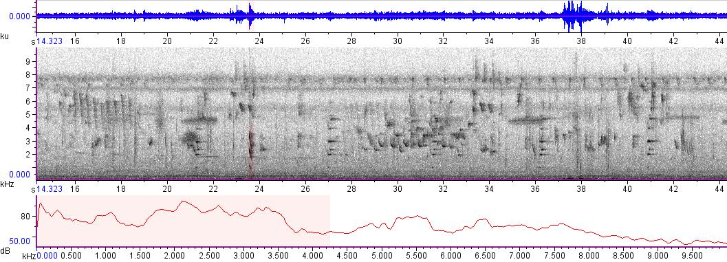 Sonogram of recording #AV 4830