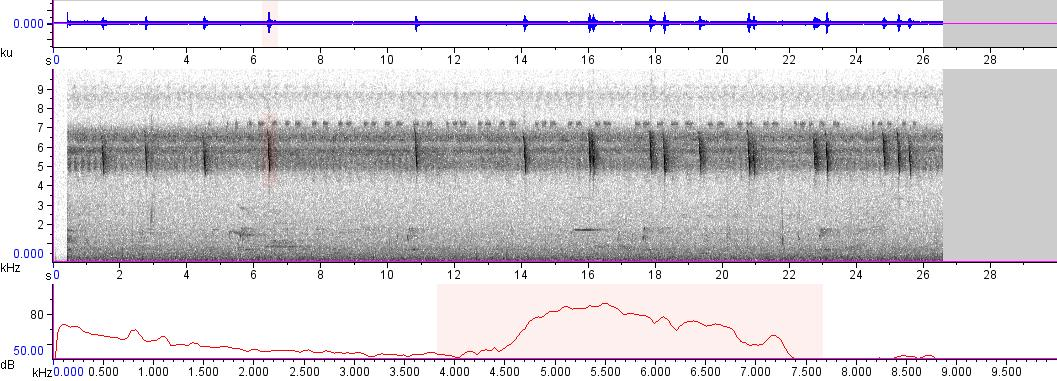Sonogram of recording #AV 4831