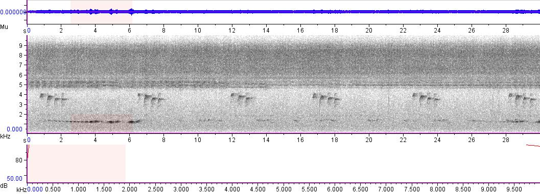 Sonogram of recording #AV 4837